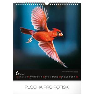 """Fotografie č. 2 k reklamnímu předmětu """"Nástěnný kalendář Ptáci 2019"""""""